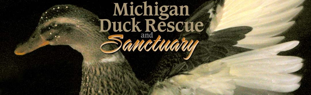 Michigan Duck Rescue and Sanctuary