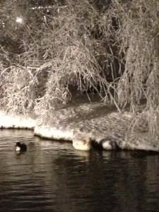 ice pond (12)